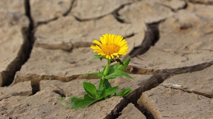 Вильфанд: прогнозы о засухе в июле – это шаманизм