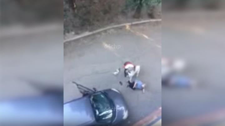 Алабай растерзал кошку и покусал женщину в Саратове. Видео