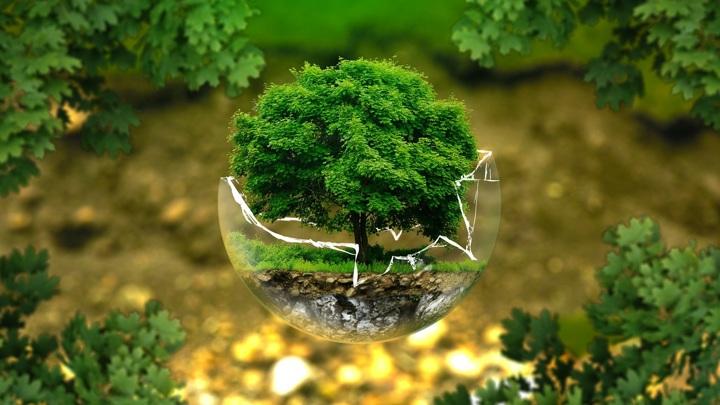 Человечество успешно спасает виды, которые само же едва не истребило.
