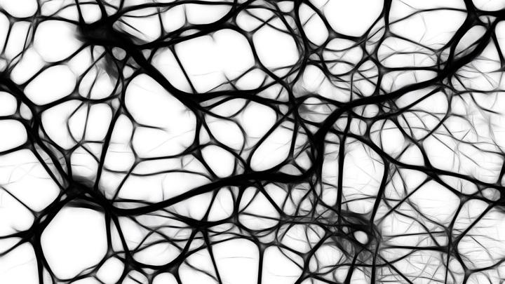 Биологи внезапно обнаружили нейроны, которые отличают приматов от других животных.