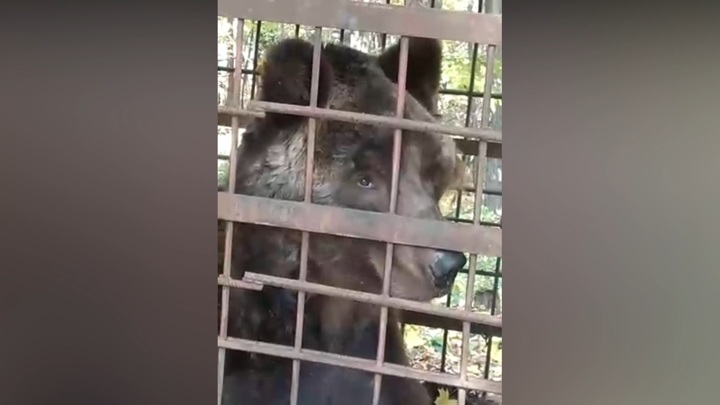 В башкирском лесу нашли клетку с истощенным цирковым медведем