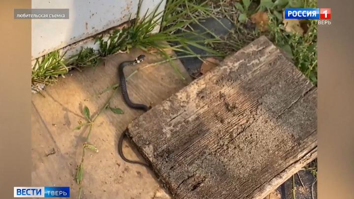 Из-за теплой погоды змеи в Тверской области не уходят в спячку