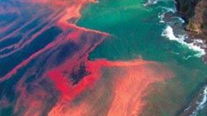 """""""Красные приливы"""" – основная версия экологического бедствия на Камчатке"""