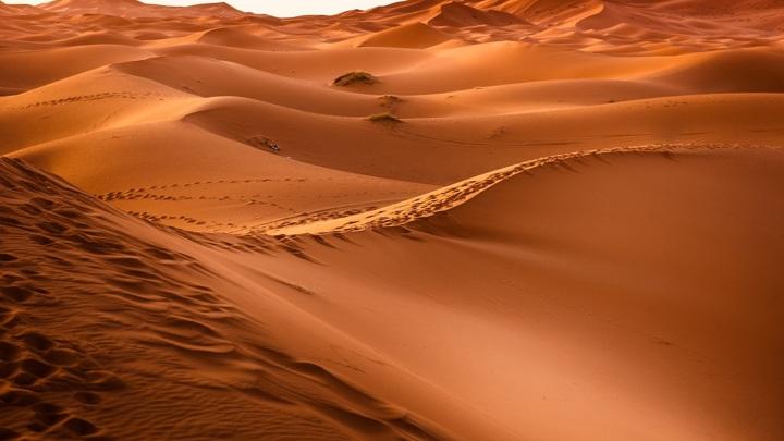 Оказалось, что пустыня не так уж пуста.