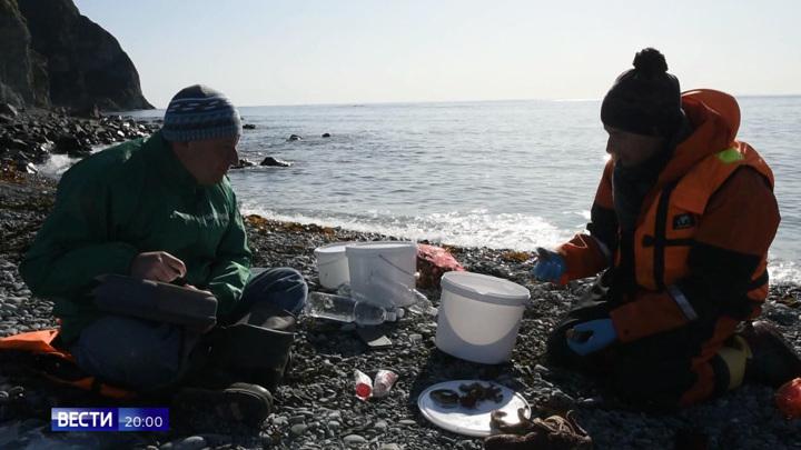 Раскрыта причина загадочной гибели морских животных на Камчатке