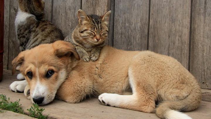 Бездомным животным найдут дом на ярмарке в Новосибирске