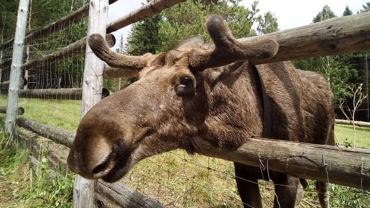 В заповедниках Челябинской области открылись лесные столовые
