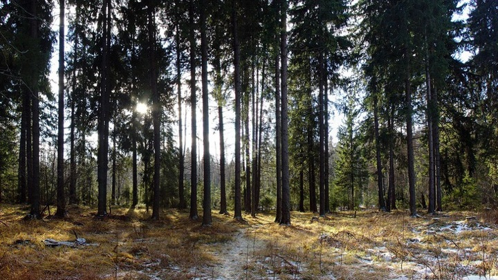 В Пензенской области незаконно срубили деревья почти на 500 тысяч рублей