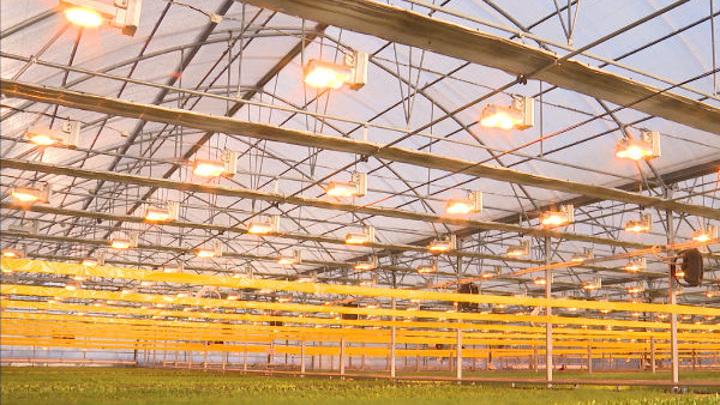 Хабаровским фермерам компенсируют затраты на строительство теплиц