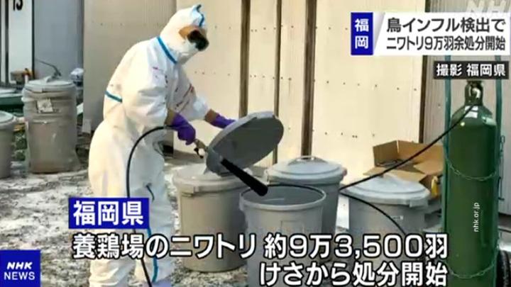 Птичий грипп зафиксирован в 10 префектурах Японии, уничтожено 2,5 миллиона кур