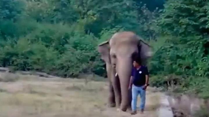 Урал принял участие в спасении одинокого слона из зоопарка Исламабада