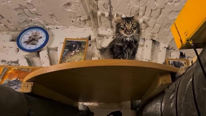 В Эрмитаже объявили о создании Союза музейных котов