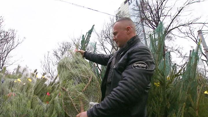 Елочки подорожали: в Москве заработали новогодние базары