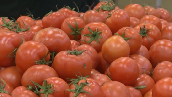С января разрешен ввоз томатов из Азербайджана и Узбекистана