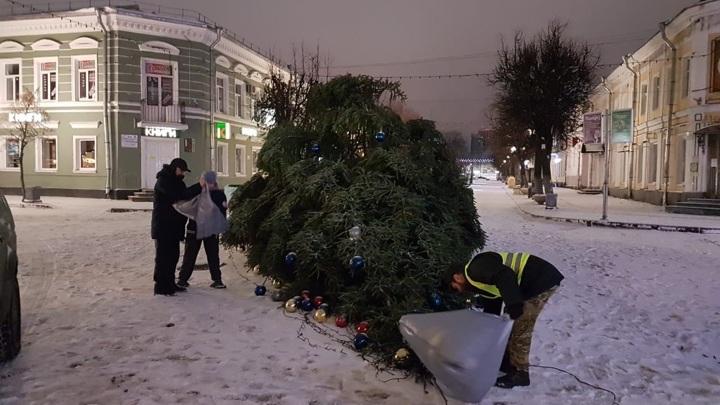 Ледяной дождь и ветер повалили новогоднюю живую ель в центре Гатчины