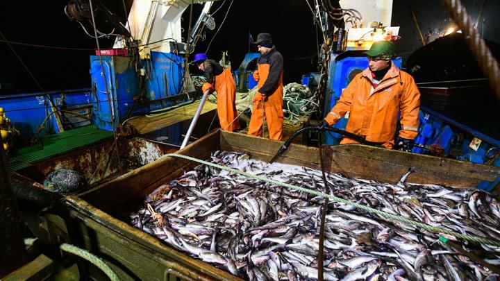 В Охотском море началась минтаевая путина