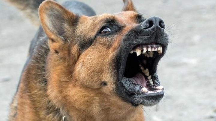 Еще одна девушка в Улан-Удэ попала в больницу после нападения собак