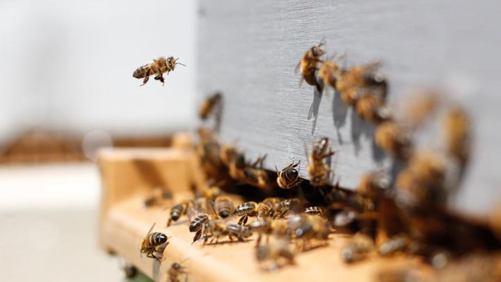 В Кемерове назвали виновников странной гибели пчел