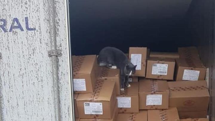 Украинский кот доплыл до Израиля на корабле в контейнере с конфетами