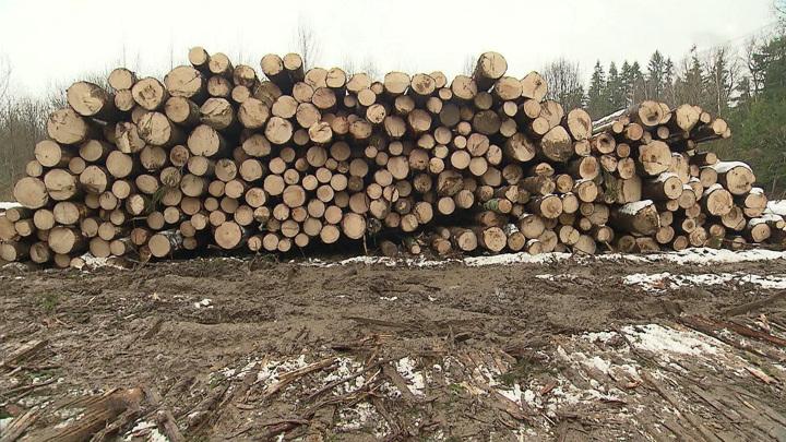 В Сибири задержаны вывозившие лесоматериалы контрабандисты