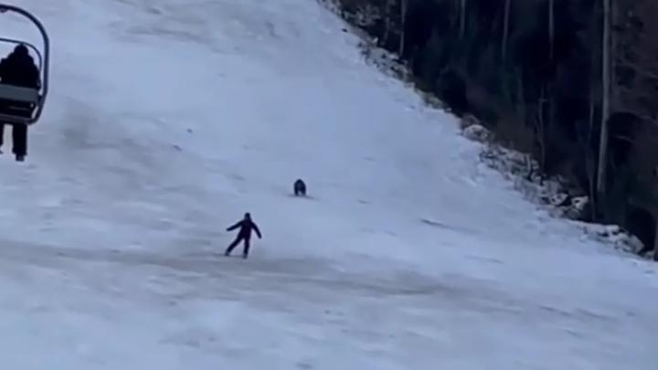 Горнолыжник был атакован медведем на склоне в Румынии