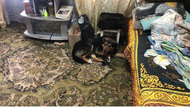 В Татарстане спасли собаку, угодившую в капкан