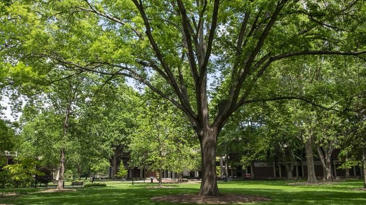 """Кампус Университета Луисвилля – один из самых """"зелёных"""" в США."""