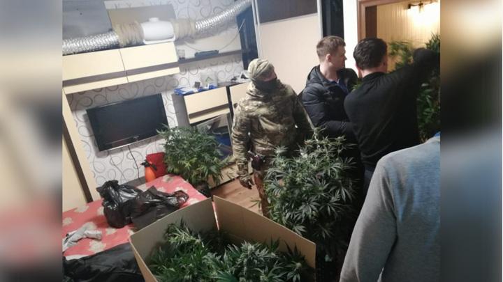 Красноярец сделал из съемной квартиры теплицу для выращивания конопли