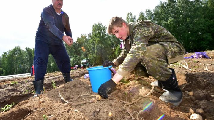 Лукашенко рассказал, почему не отправит сына учиться на Запад