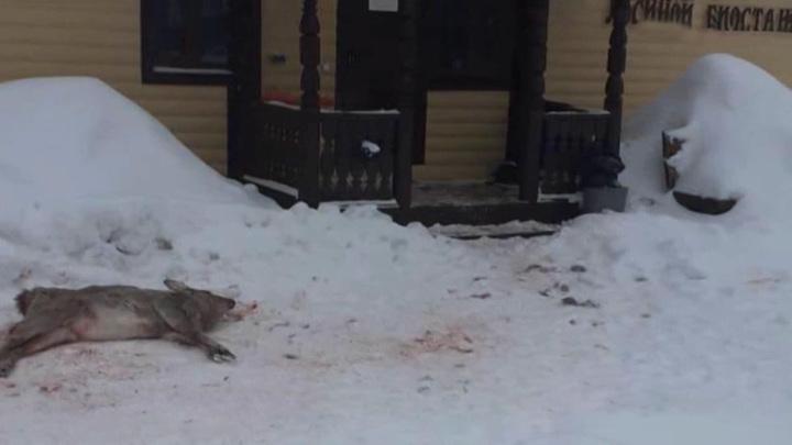 """Собаки или браконьеры? Кто массово убивает оленей в """"Лосином острове"""""""