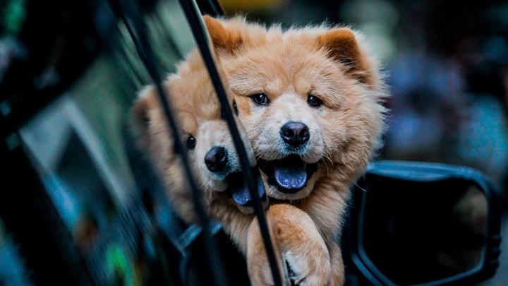 Дачные траты: за перевозку стройматериалов и животных могут оштрафовать
