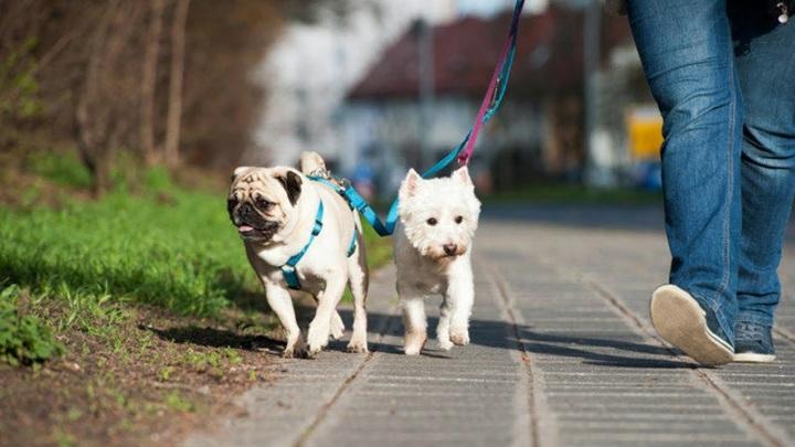 В Великобритании растет популярность услуги по прокату собак