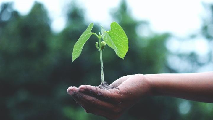 Швейцарская Syngenta откроет в России Институт защиты семян