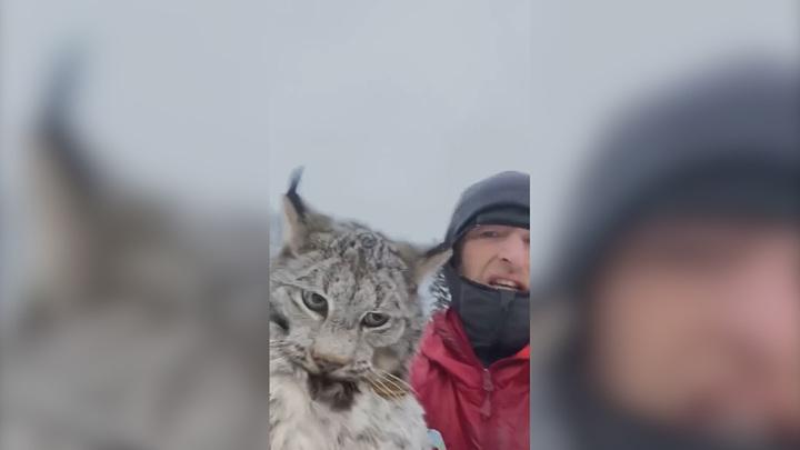 Канадский фермер поймал и простил разорившую курятник рысь. Видео