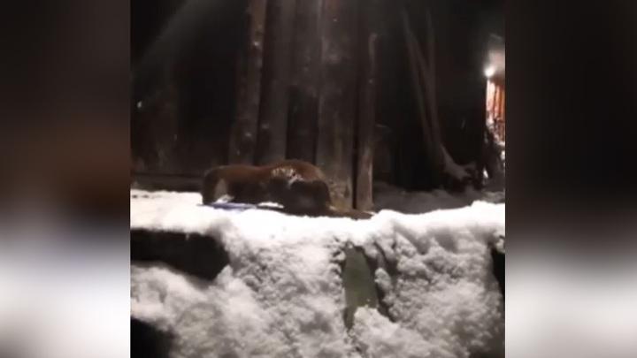 Московский зоопарк показал, чем его обитатели занимаются по ночам