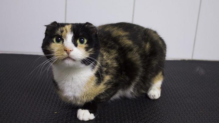 Кошке без зубов ищут новый дом в Новосибирске