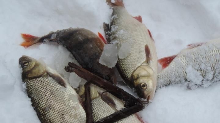 СКР начал проверку из-за гибели рыбы в реке Усманка