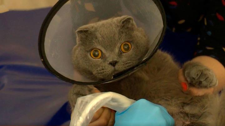Лицензирование ветклиник: кто спасет животных от врачей без дипломов