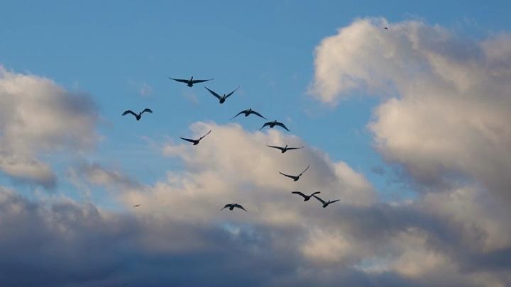 Перелетные птицы начали возвращаться в Москву