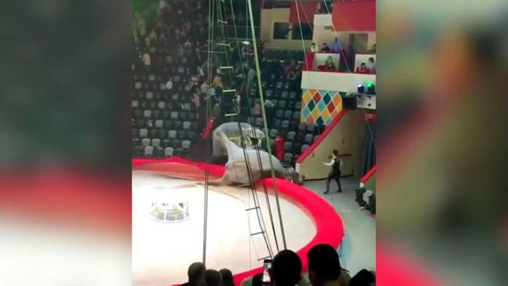 Следователи ведут проверку по факту драки двух слонов в казанском цирке