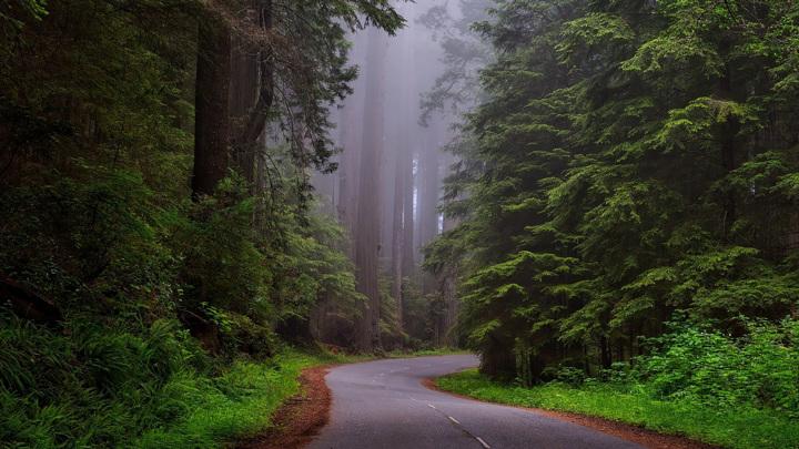 Есть причина, по которой стоит проводить время на природе в тишине.