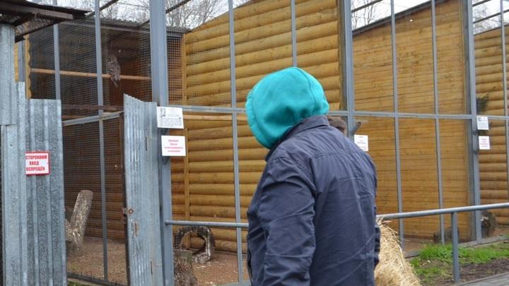 За неуплату алиментов жителя Иванова отправили в зоопарк