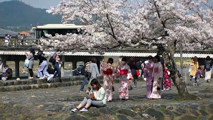 Цветущая сакура напоминает о том, что все заканчивается