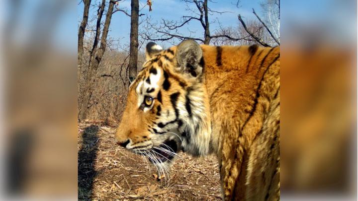 Житель Приморья украл фотоловушки с кадрами редких животных