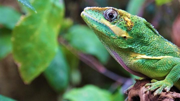 Чем меньше в мире разных видов животных и растений, тем легче распространяются заболевания, которые могут принять масштаб эпидемии. Но почему?