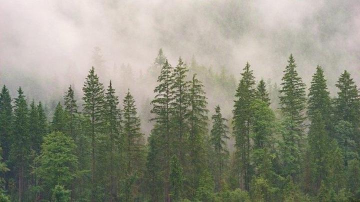 В Забайкалье стартовал эксперимент по цифровизации лесной отрасли