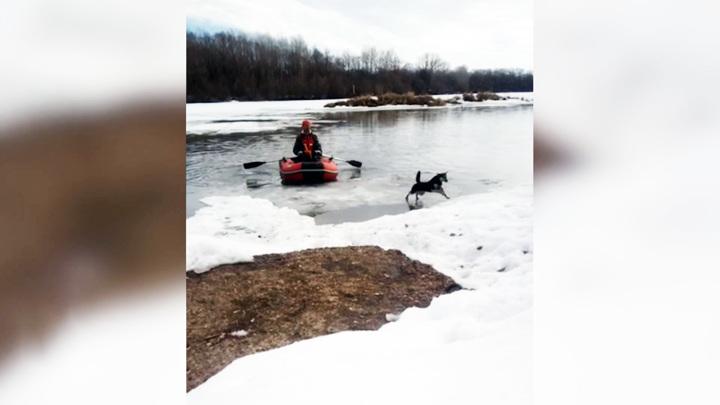 Житель Стерлитамака на надувной лодке спас собаку с льдины