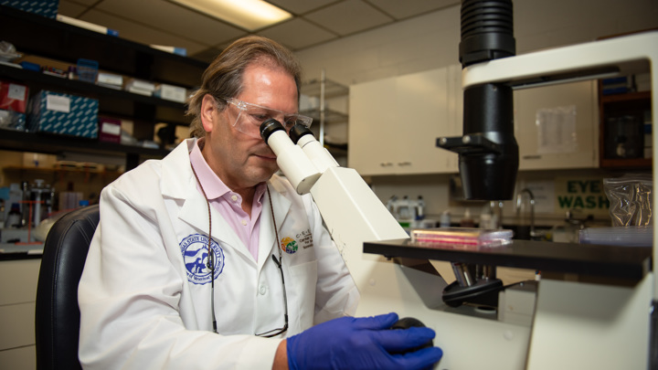 Группа профессора Юргена Рихта из Университета Канзаса ранее изучала передачу SARS-CoV-2 у домашних кошек и свиней.