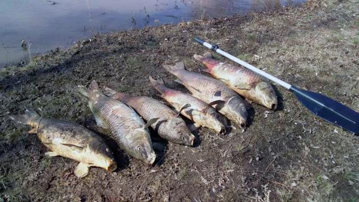 Причину массовой гибели рыбы в реке Иртек в Оренбуржье установит полиция