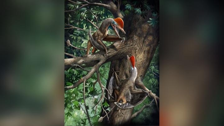 """Юрские птерозавры оказались самым древним видом с """"обезьяньим"""" строением кисти."""
